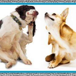 Medicamento para Tratar la Sarna en Perros