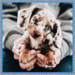 Medicamento para Inducir el Parto en Perros