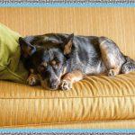 Medicamentos para la Diarrea en Perros
