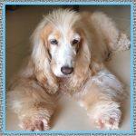 Medicamento para Perro con Gripe