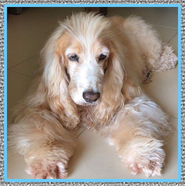 medicina para perro con gripe