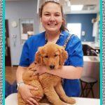 Medicamentos Homeopáticos para Perros