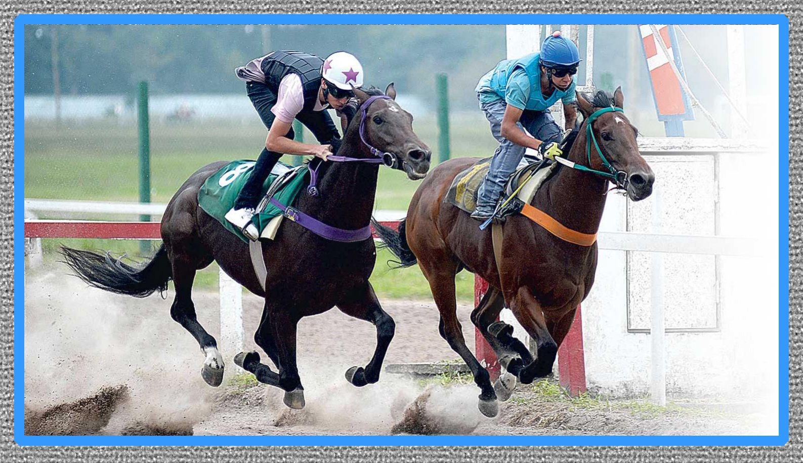 medicina para caballos de carreras cuadreras