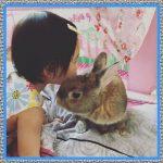 Medicamentos para Conejos Enfermos