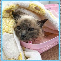 Medicamentos para Desparasitar Gatos