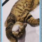 Medicamentos para Dormir Gatos