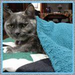 Medicamentos para Gatos Resfriados