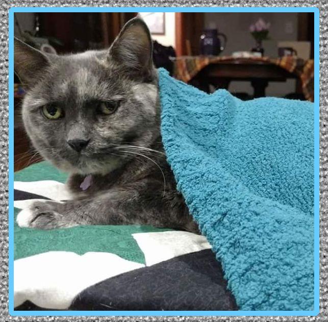 medicina para gatos resfriados