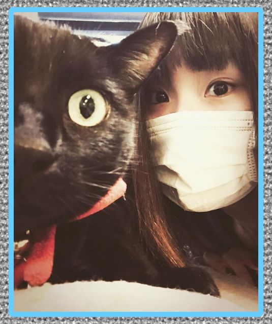 medicina para la alergia a los gatos