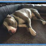 Medicamentos para la Artrosis en los Perros