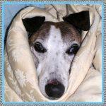 Medicamentos Para Perros con Tos