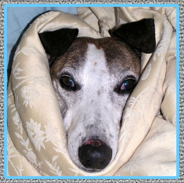 medicina para perros con tos