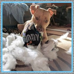 Medicamentos para Perros Hiperactivos