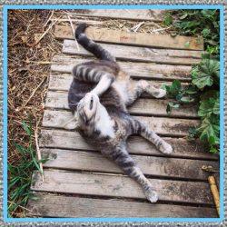 Medicamentos Para Pulgas en Gatos