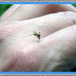 Medicamentos para Tratar el Zika