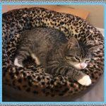Medicamentos para Tratar la Sarna en Gatos
