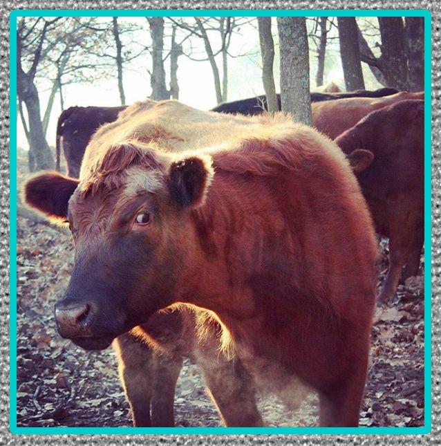 medicina veterinarios para bovinos