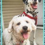 Antihistamínico Natural para Perros
