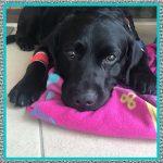 Medicamentos Antihistamínico para Perros