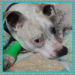 Medicamentos Antiinflamatorio Recomendado para Perros