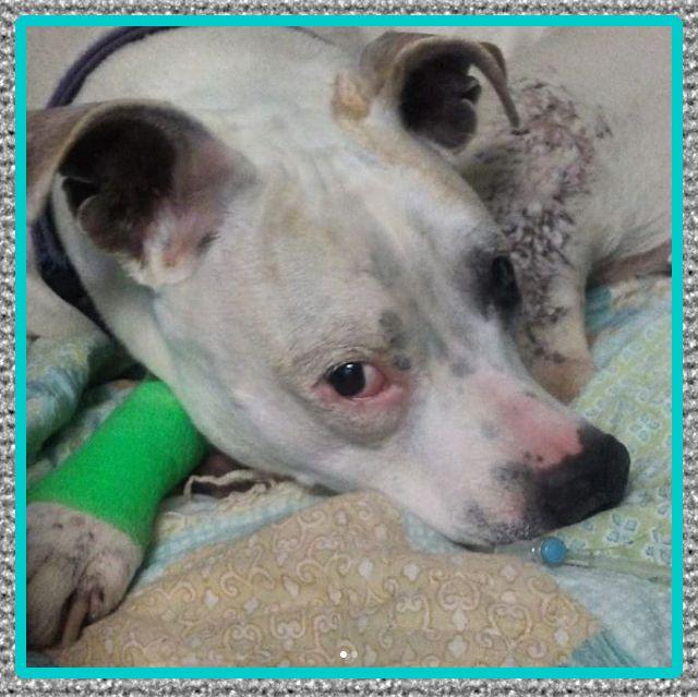 Medicinas antiinflamatorio recomendado perros