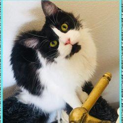 Tranquilizante para Gatos Agresivos