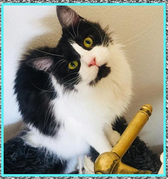 Medicina para Tranquilizar Gatos