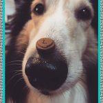 Medicamentos de Humanos que Pueden Tomar los Perros