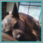 Medicamentos para Dolor de Oídos en Perros