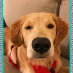 Medicamentos para la Epilepsia en Perros