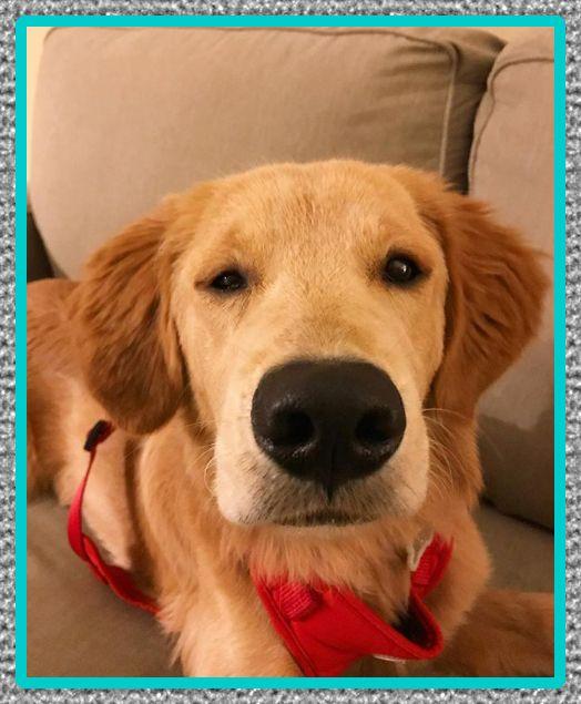 medicinas para la epilepsia en perros