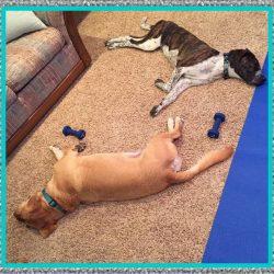 Relajante Muscular para Perros