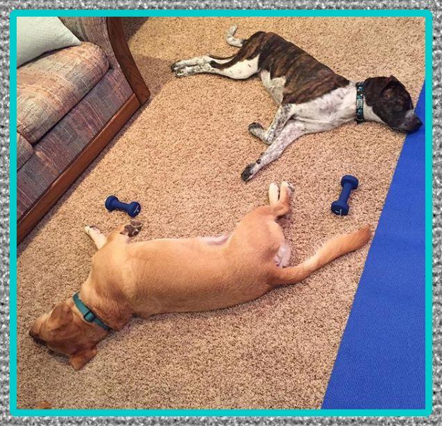 medicina relajante muscular para perros