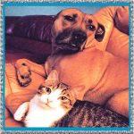 ¿La dipirona es para uso en veterinaria? Como es su dosis en perros o gatos