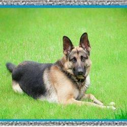 Síntomas de Leishmaniasis en Perros – Leishmaniasis Tratamiento Farmacológico
